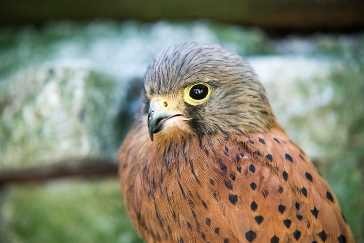 The Falcon has a sharp eye, just like any detective ought to have.