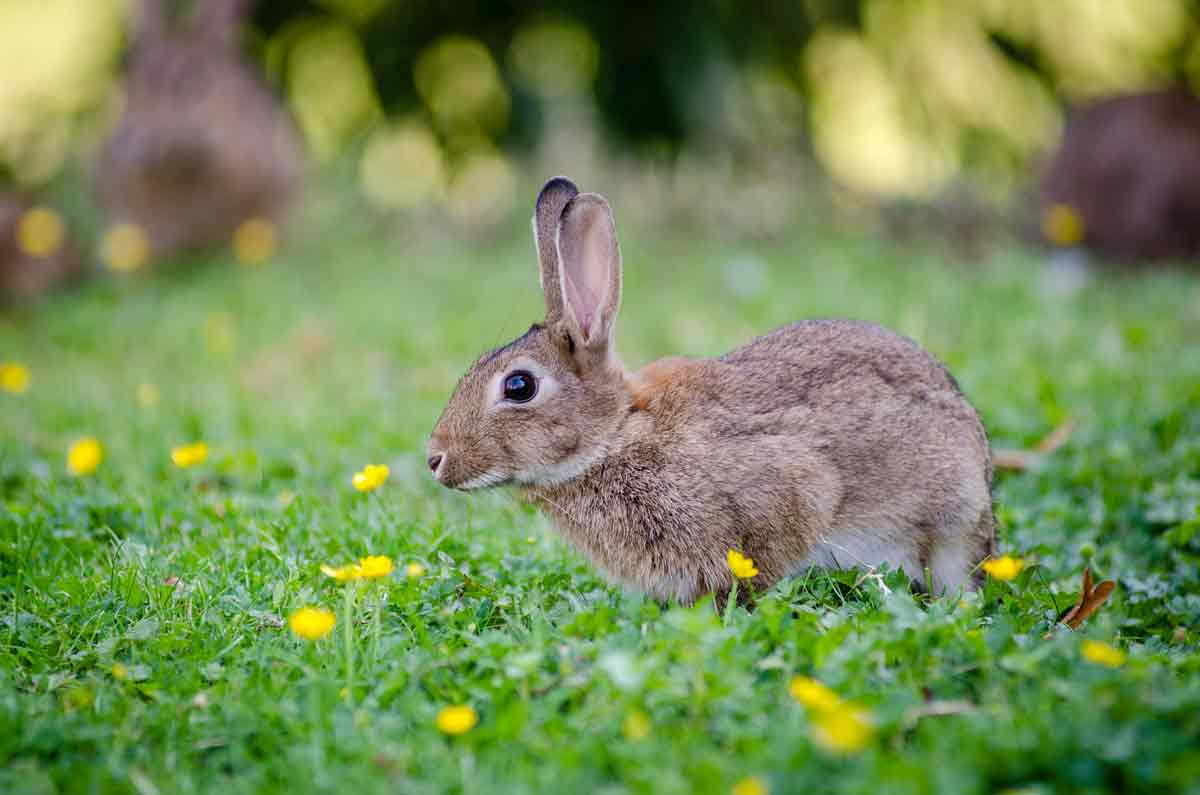 'Watership Down' is a story about rabbits