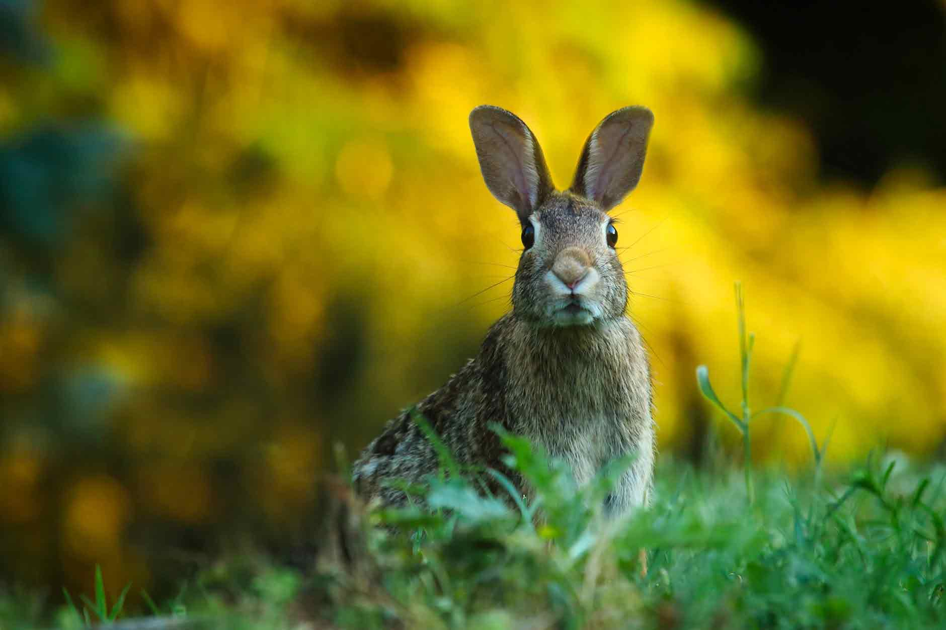 What is your favorite quote from 'Watership Down'?