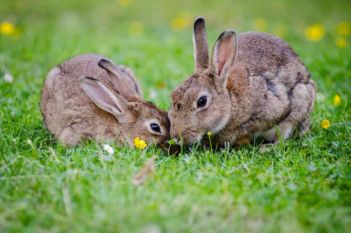 Do you know which 'Watership Down' quotes are said by which rabbits?