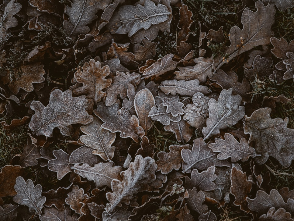 Awe-inspiring quotes about frost.