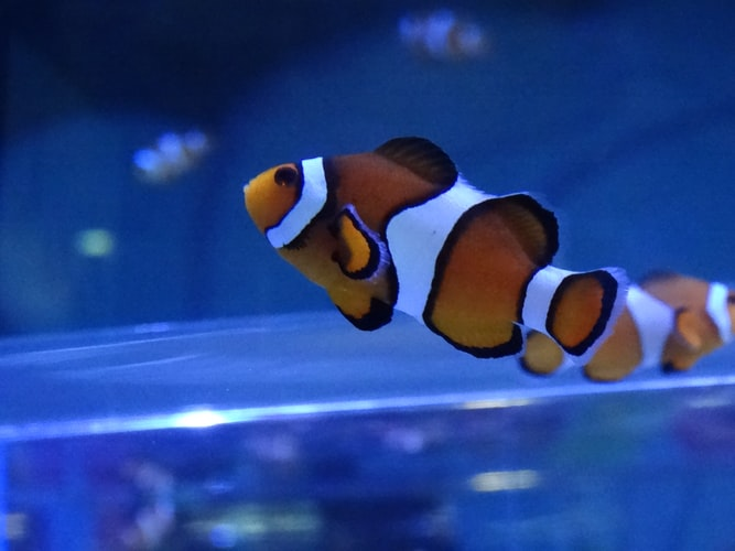 Nemo, Dory both are real friends in the movies.