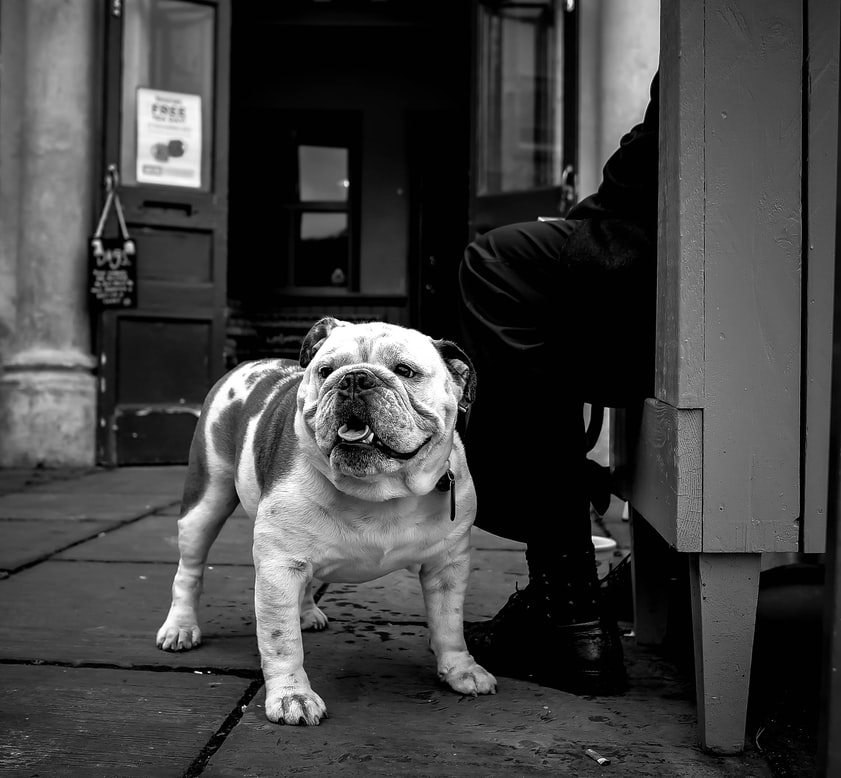 The corps adopted a bulldog, the first mascot to enlist into the ranks in 1922 named Jiggs and later included in the force.
