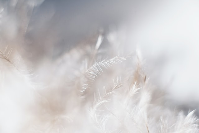 Feather quotes are popular across the world