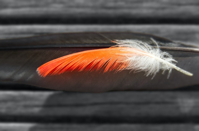 Feather quotes are very motivating for all people