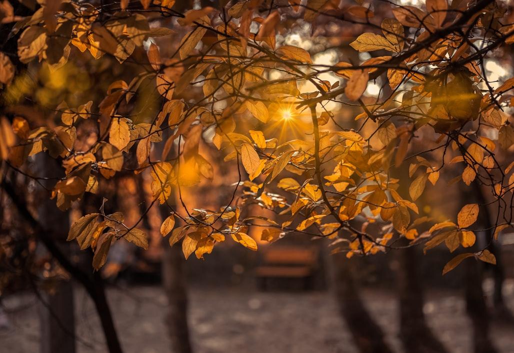 November days increase anticipation for upcoming holidays.