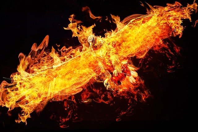Many cultures have stories of the phoenix.