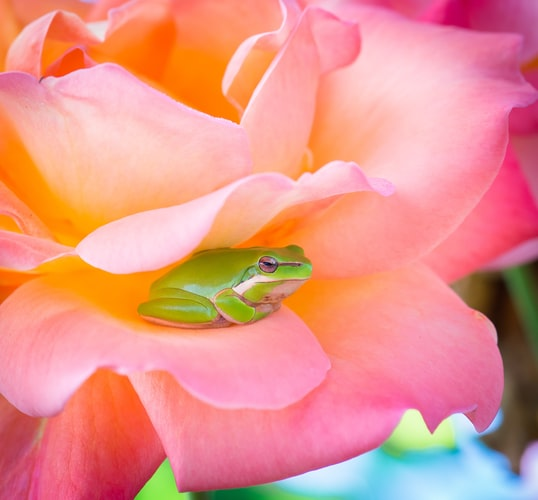 Frogs are a symbol of motivation and patience.