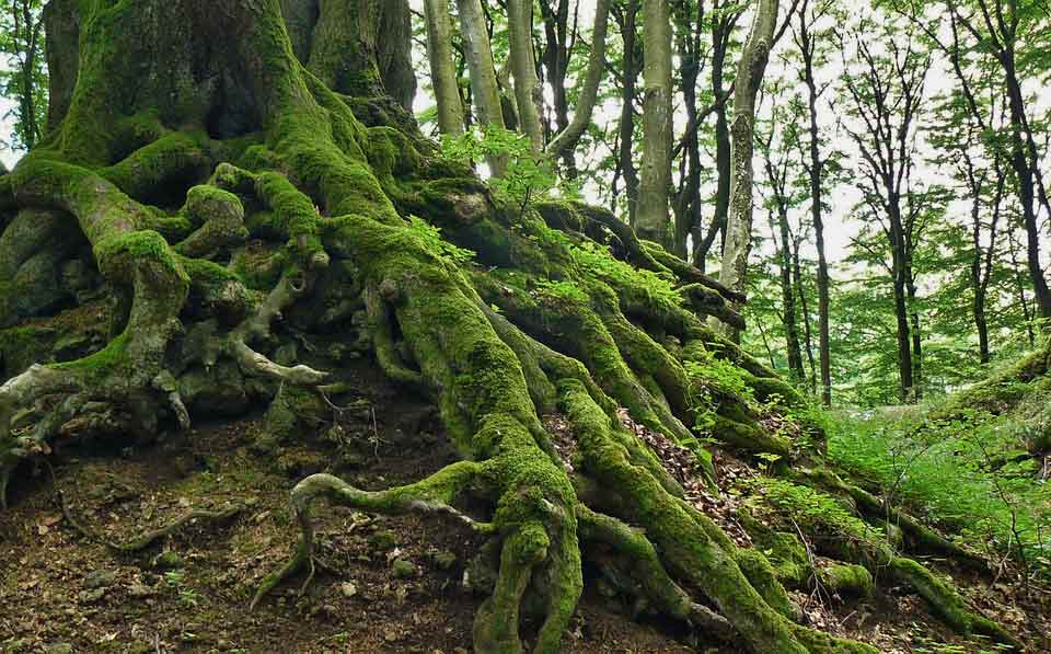 Roots in the ground keep the trees strong and that inspires us to keep our roots stronger