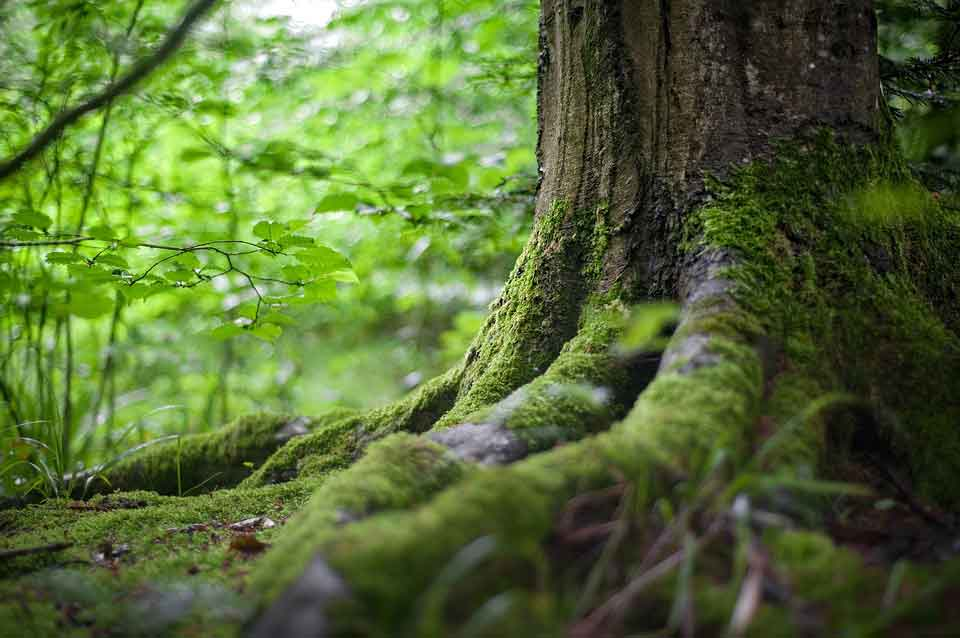 Deep roots nourish the trees and that's what we should learn as well - our traditions nourish us.
