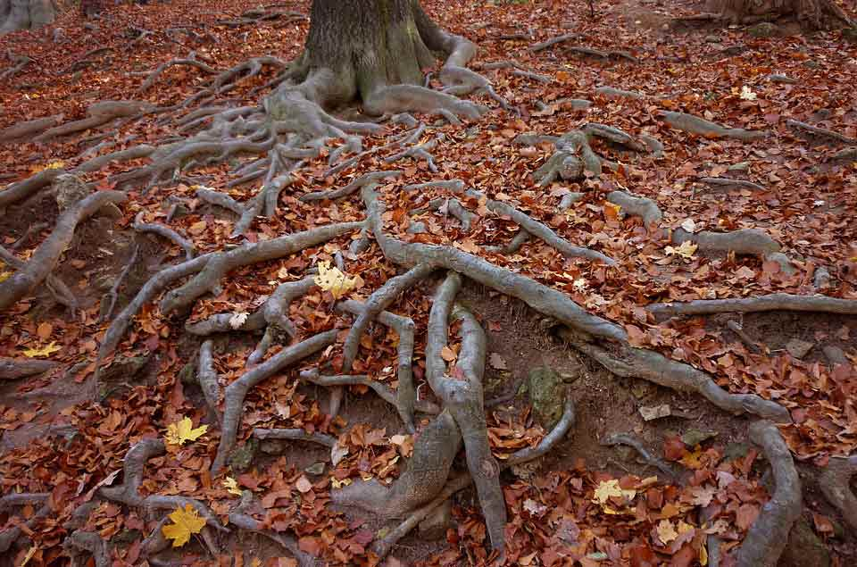 Leaves fall, branches break, but roots stay. In the same way, our core values should stay intact.