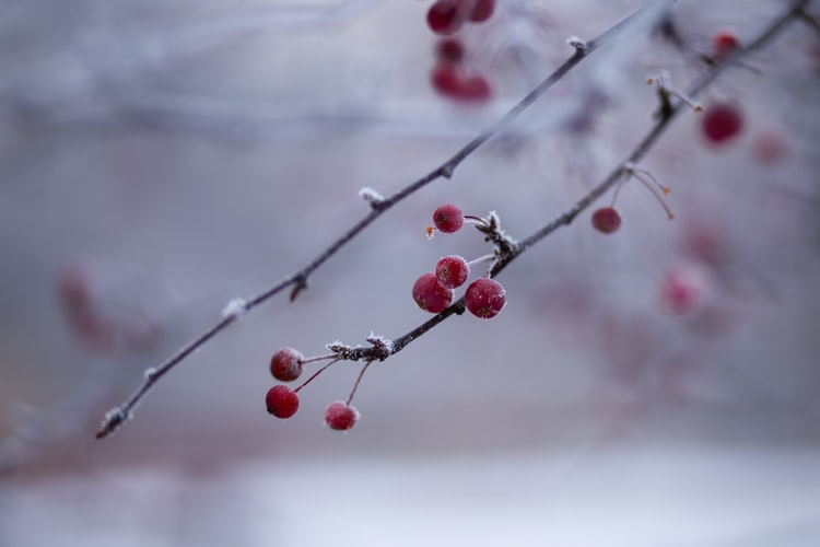 January is a new year beginning but it still has winter and it can be beautiful.