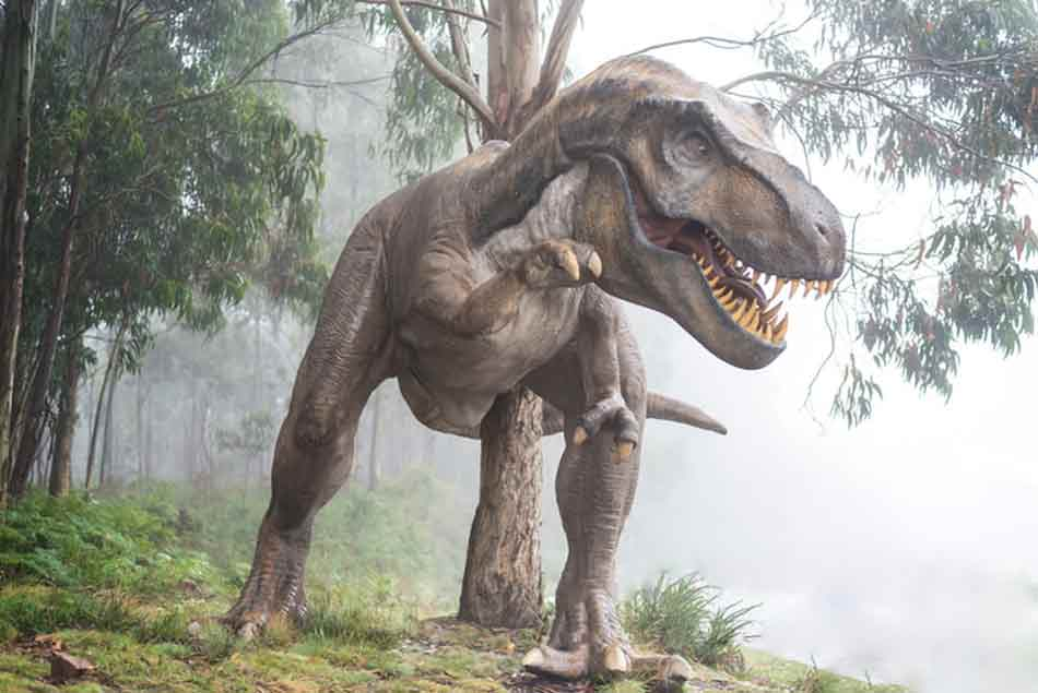 Dinosaurs teach us a lot about pre-historic times on earth