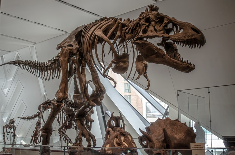 Dinosaurs are a favorite subject for many natural history lovers.
