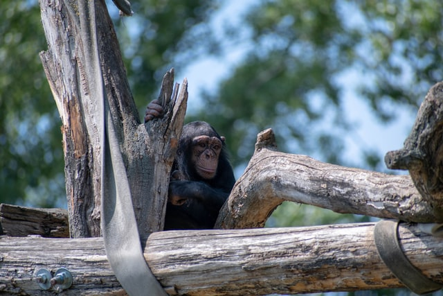 These 'Planet Of The Apes' quotes show us why the movie is so critically appreciated.
