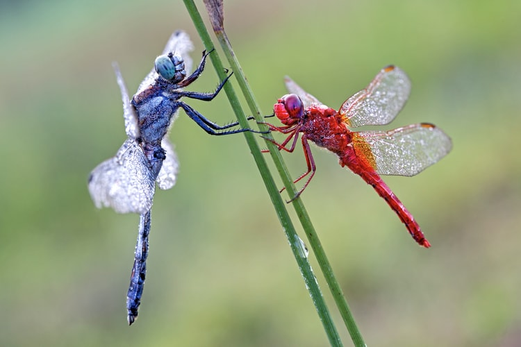 Dragonfly quotes are quite magical