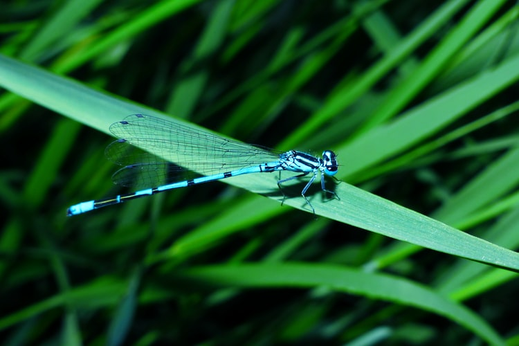 Dragonfly quotes can help you connect to nature.