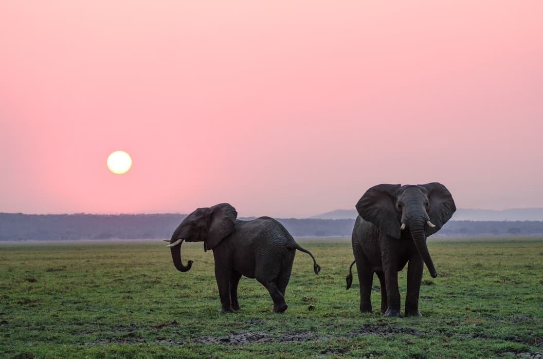 Elephant quotes can raise awareness on protecting this species.
