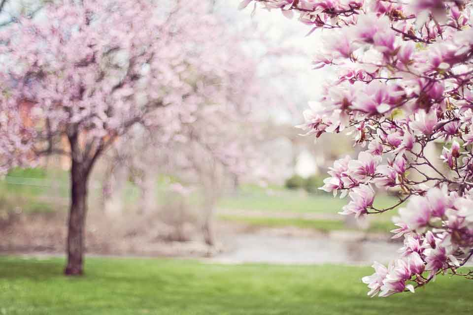 Spring is the time of the year when nature renews itself.
