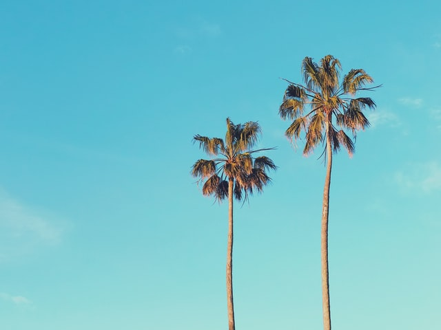Palm tree quotes also have a spiritual connection.