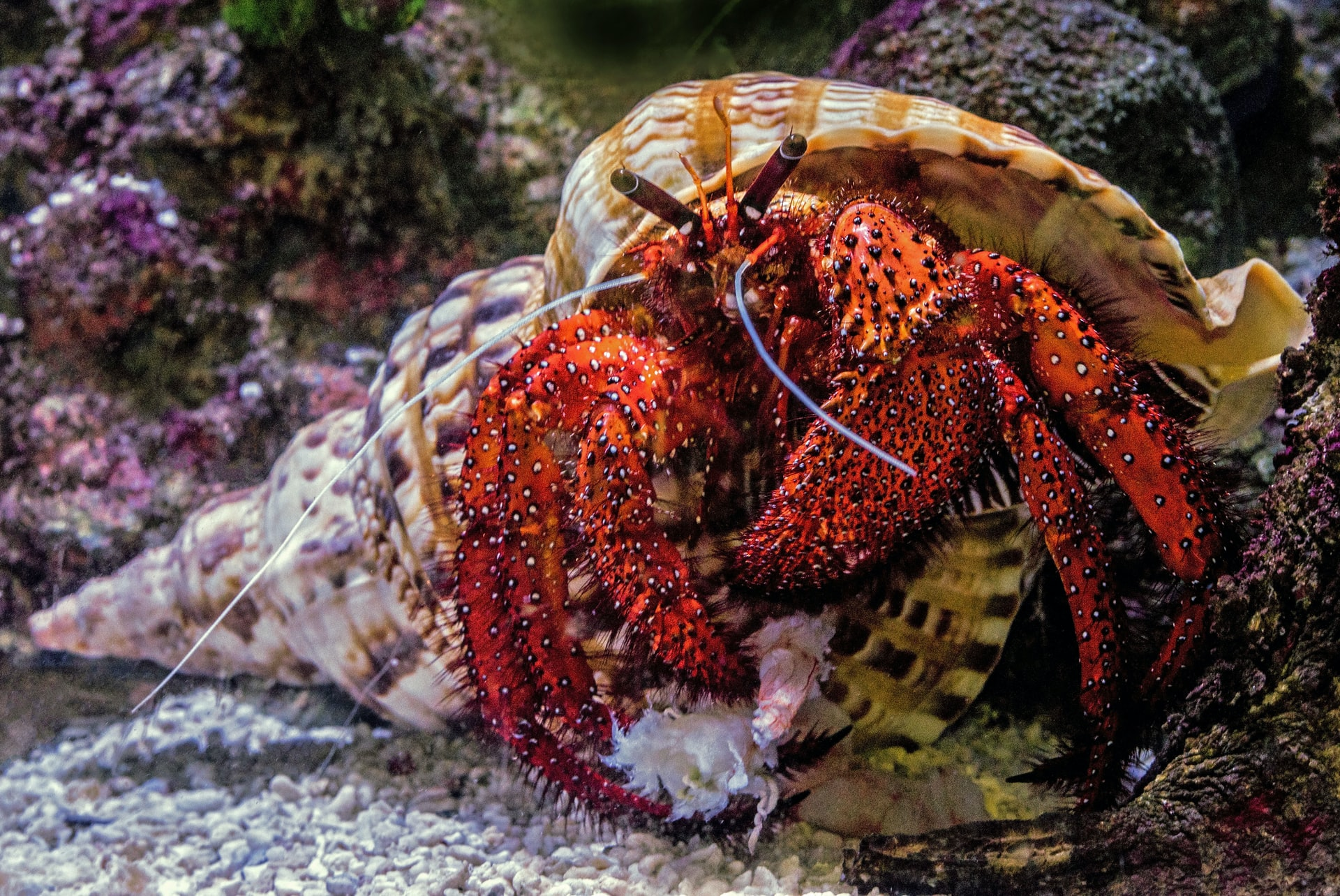 Discover good hermit crab names for your new pet.