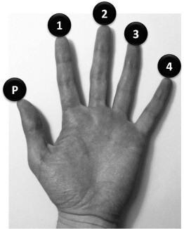numérotation des doigts guitare