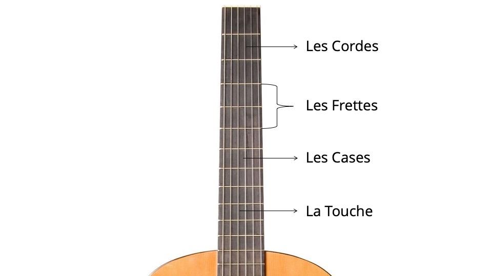 anatomie manche guitare classique