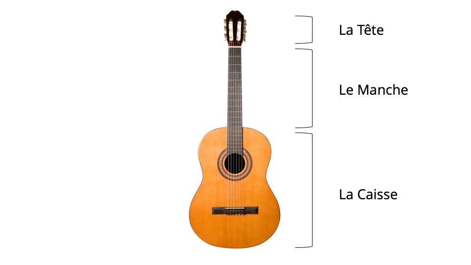 anatomie guitare classique