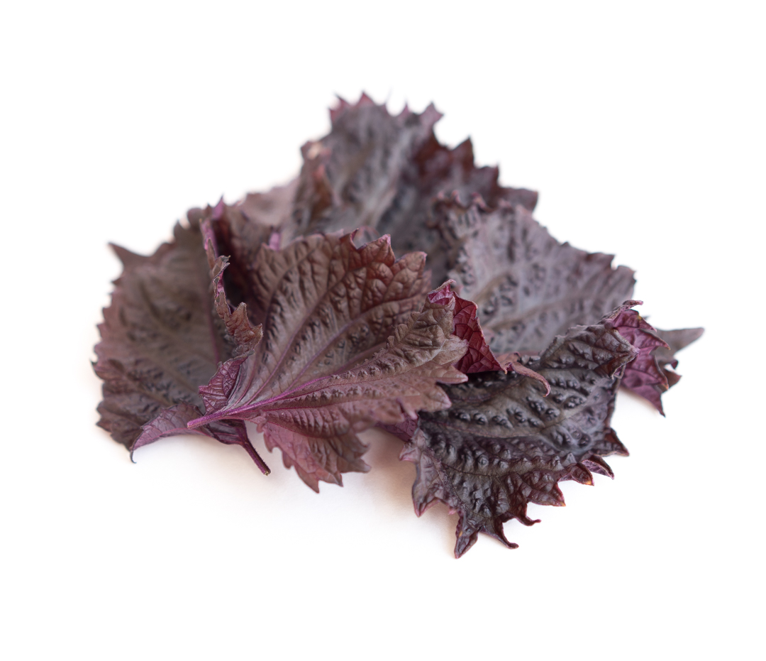 Dark red serrated leaves with the aroma of a mountain in the rain