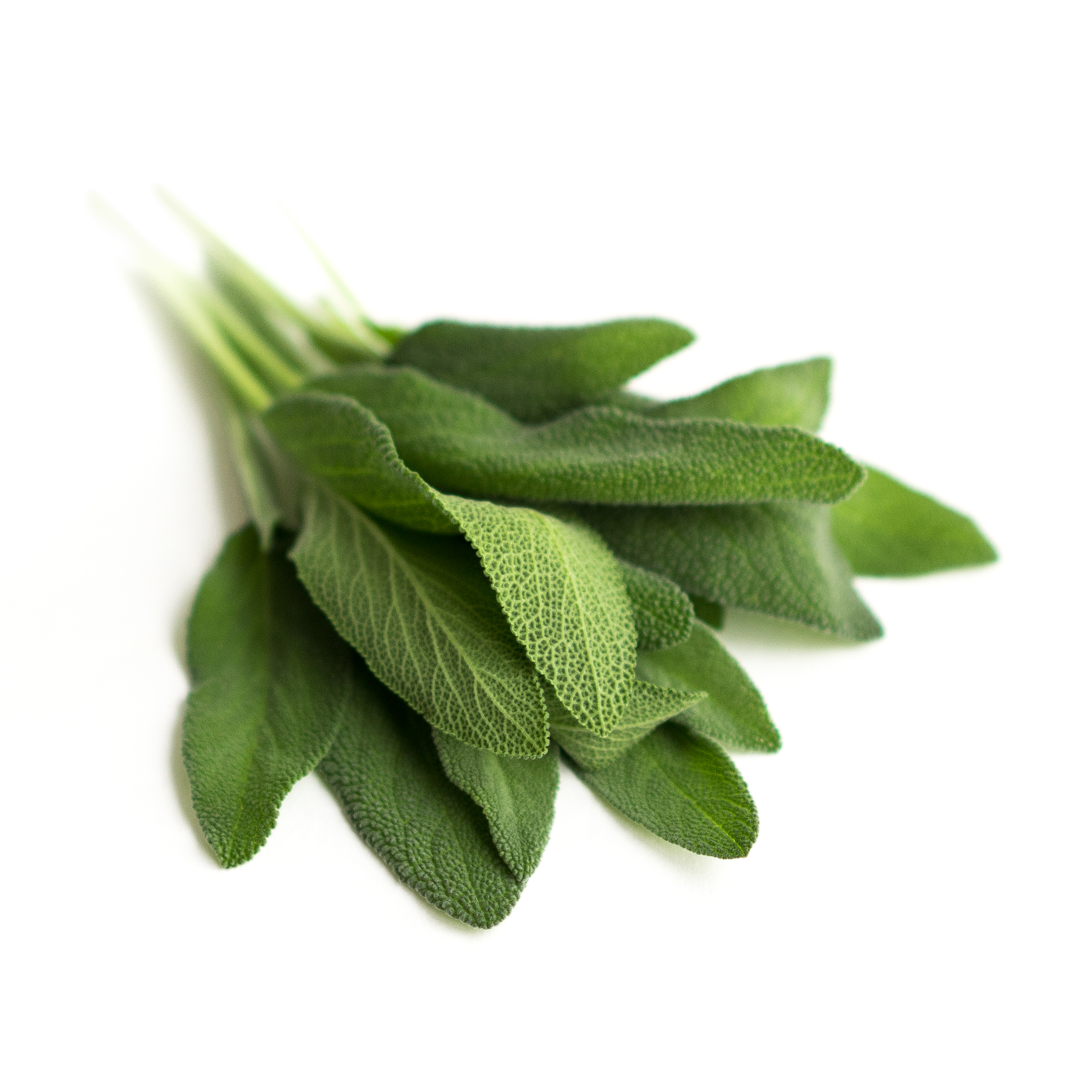 Strong savory herb with musty, minty aroma and soft, large leaves