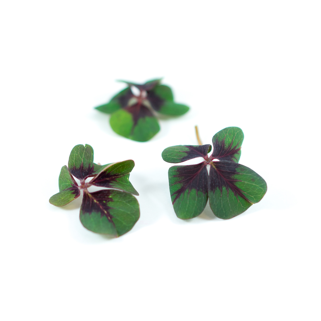 Tangy sour triangular shamrock-shaped leaves