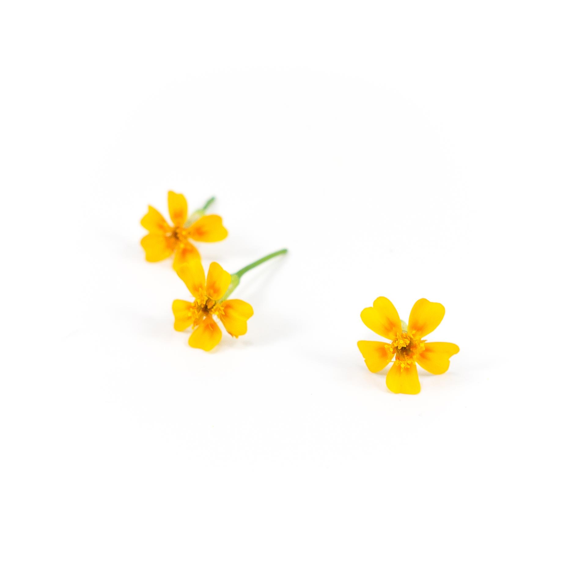 Marigold (Tangerine Gem)