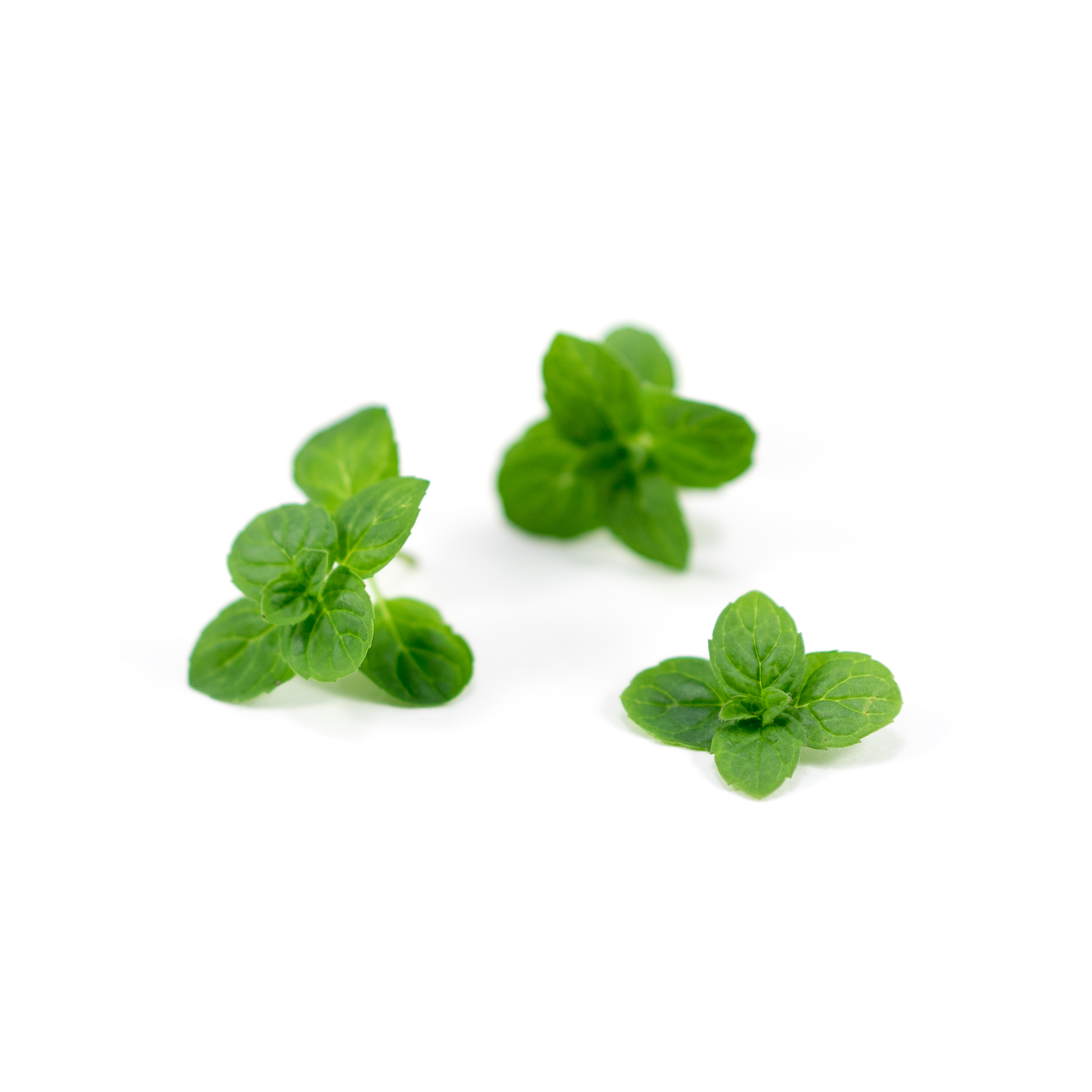 Sweeter, lemon-scented mint with green leaves