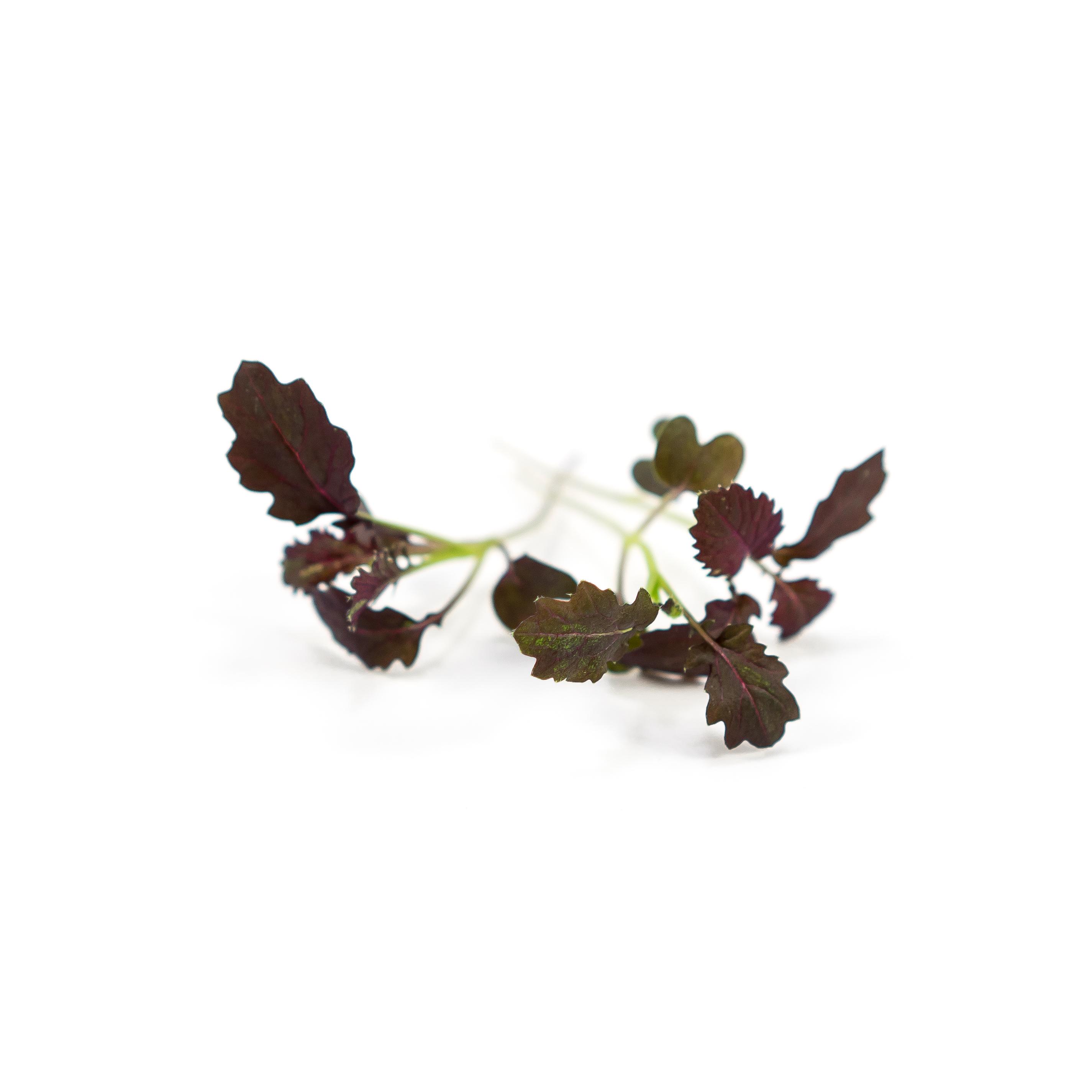 Dark purple color serrated leaves with mild mustard taste