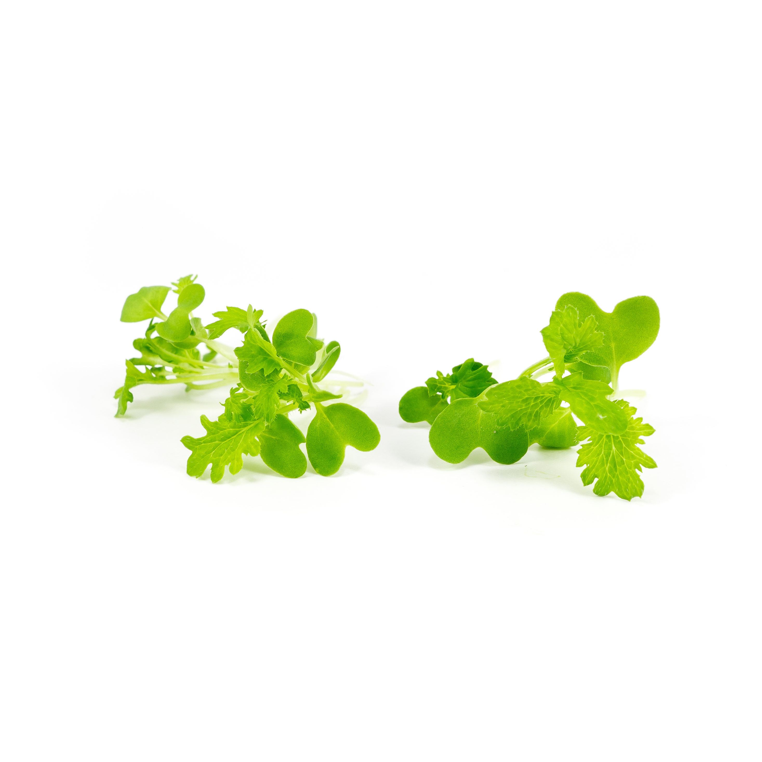Spicy mustard and horseradish flavors in bright green micro leaves