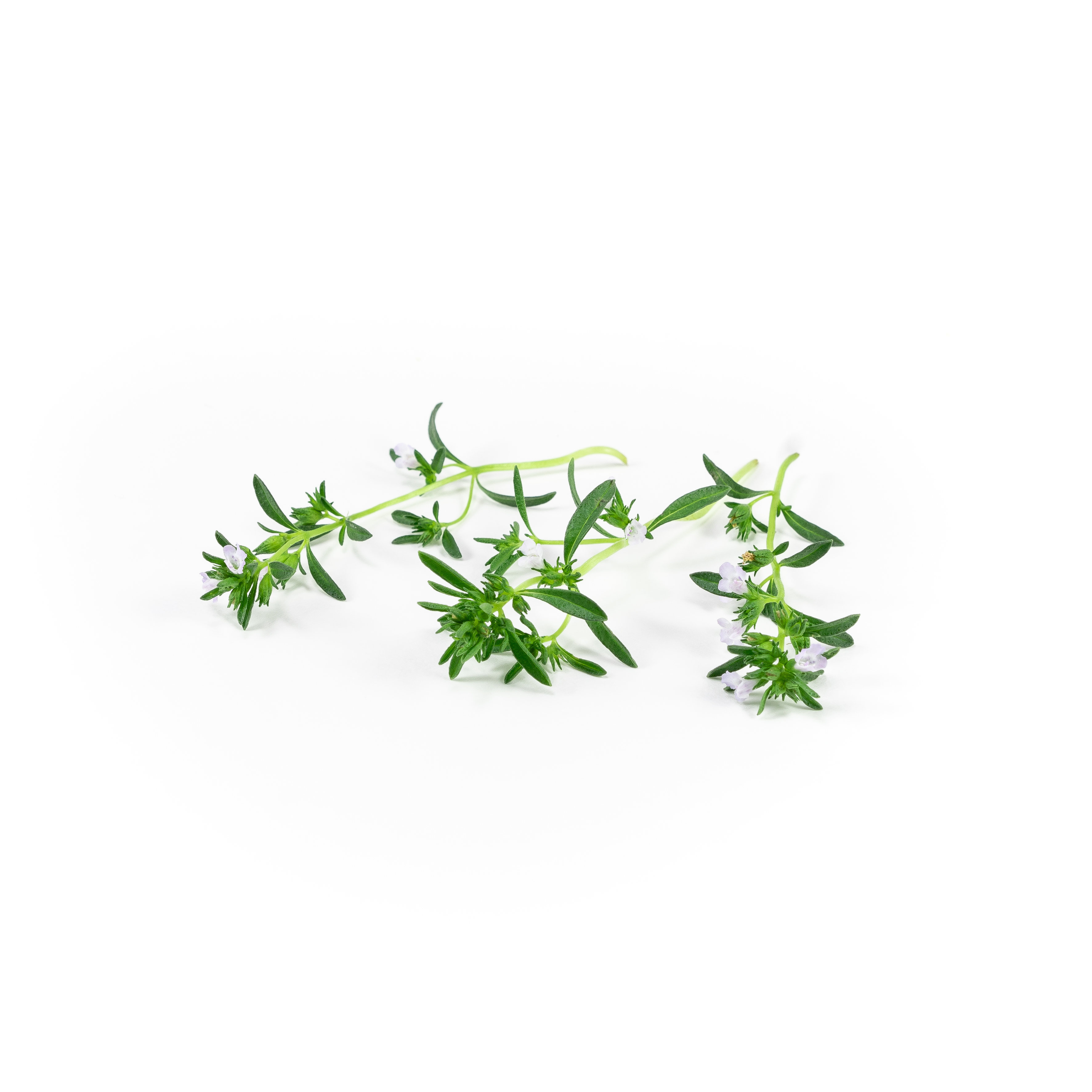 Strong peppery, thyme-like flavor with fine leaves and small flowers