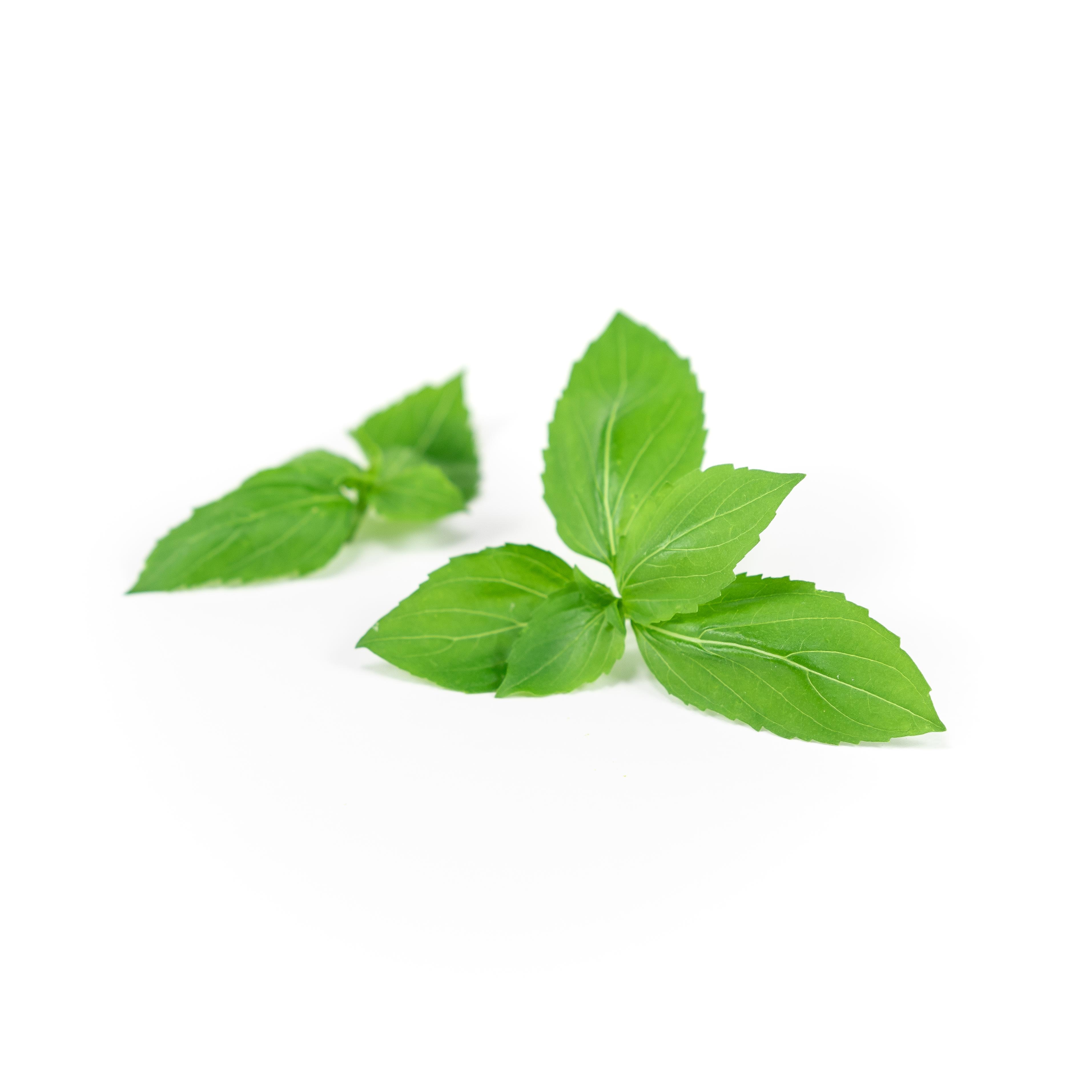 Basil (Cinnamon)