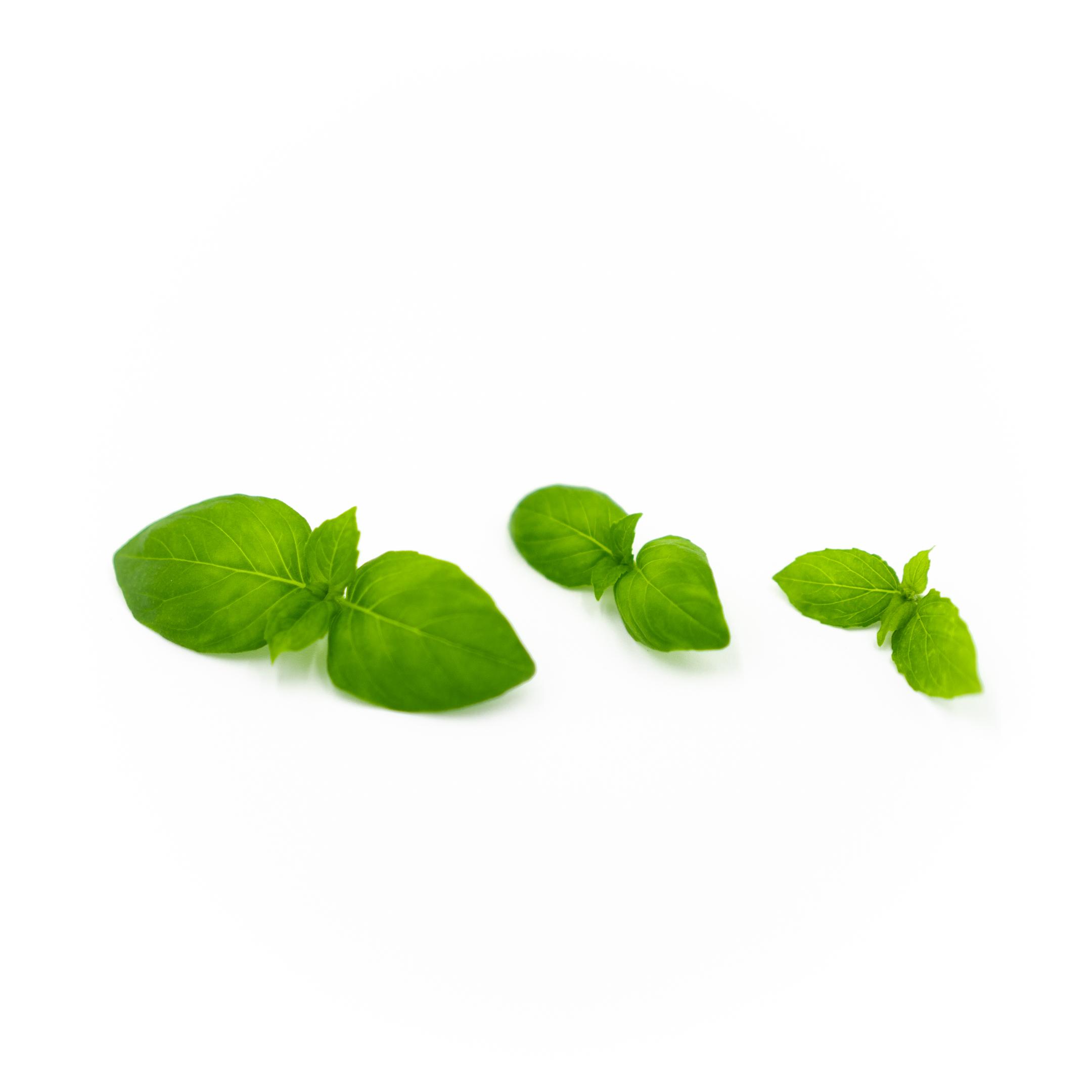 Basil (Lemon)