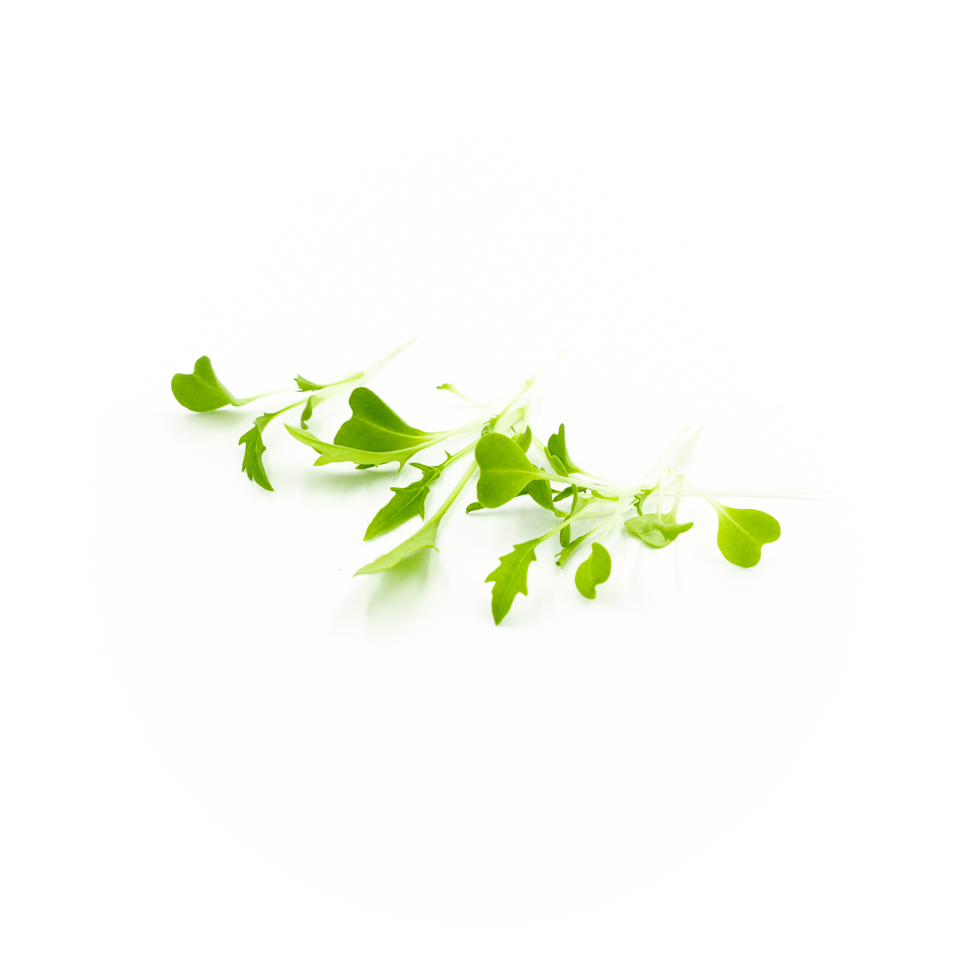 Mild mustard and peppery flavors in bright green leaves with whiter stems