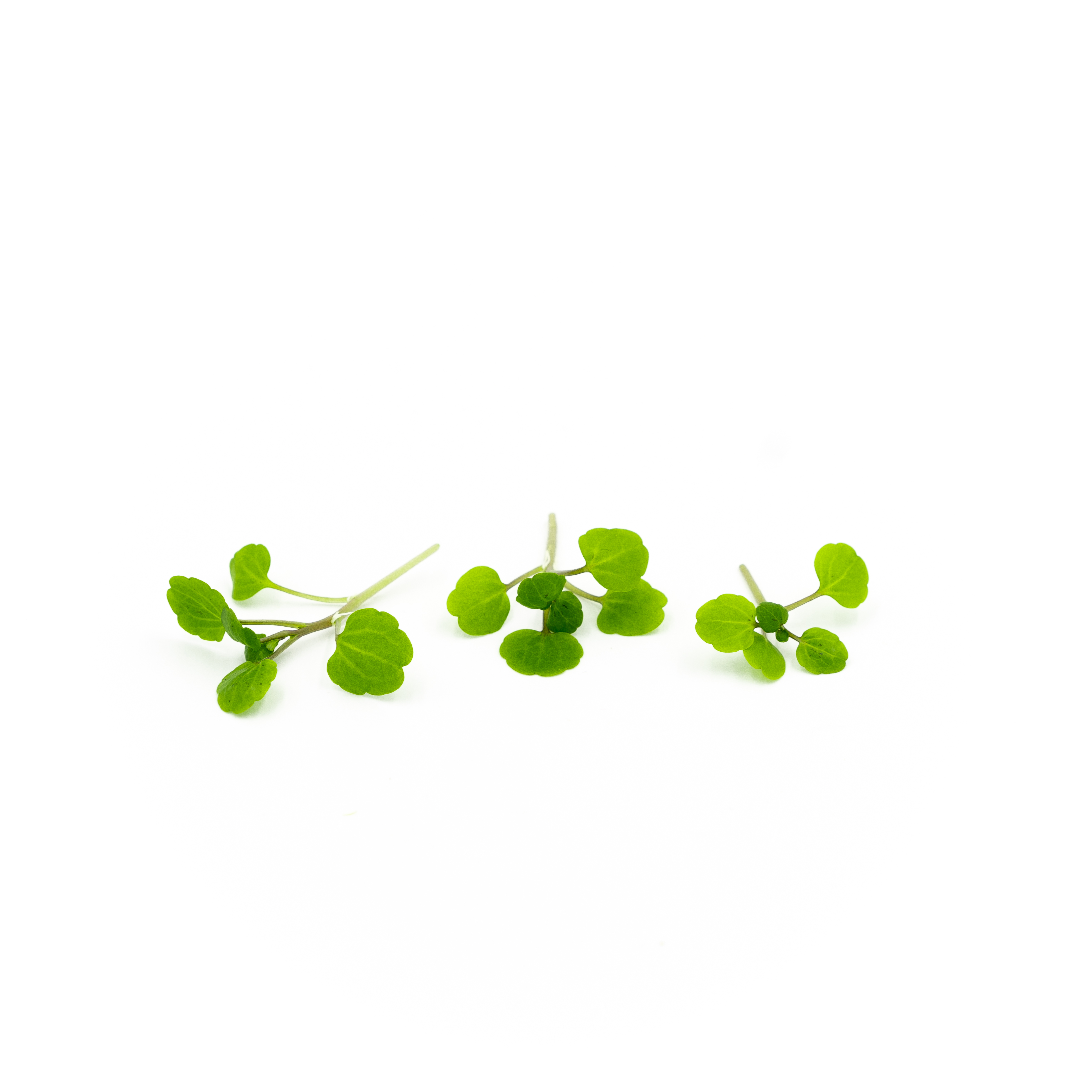 Peppery watercress flavor in small crisp leaves