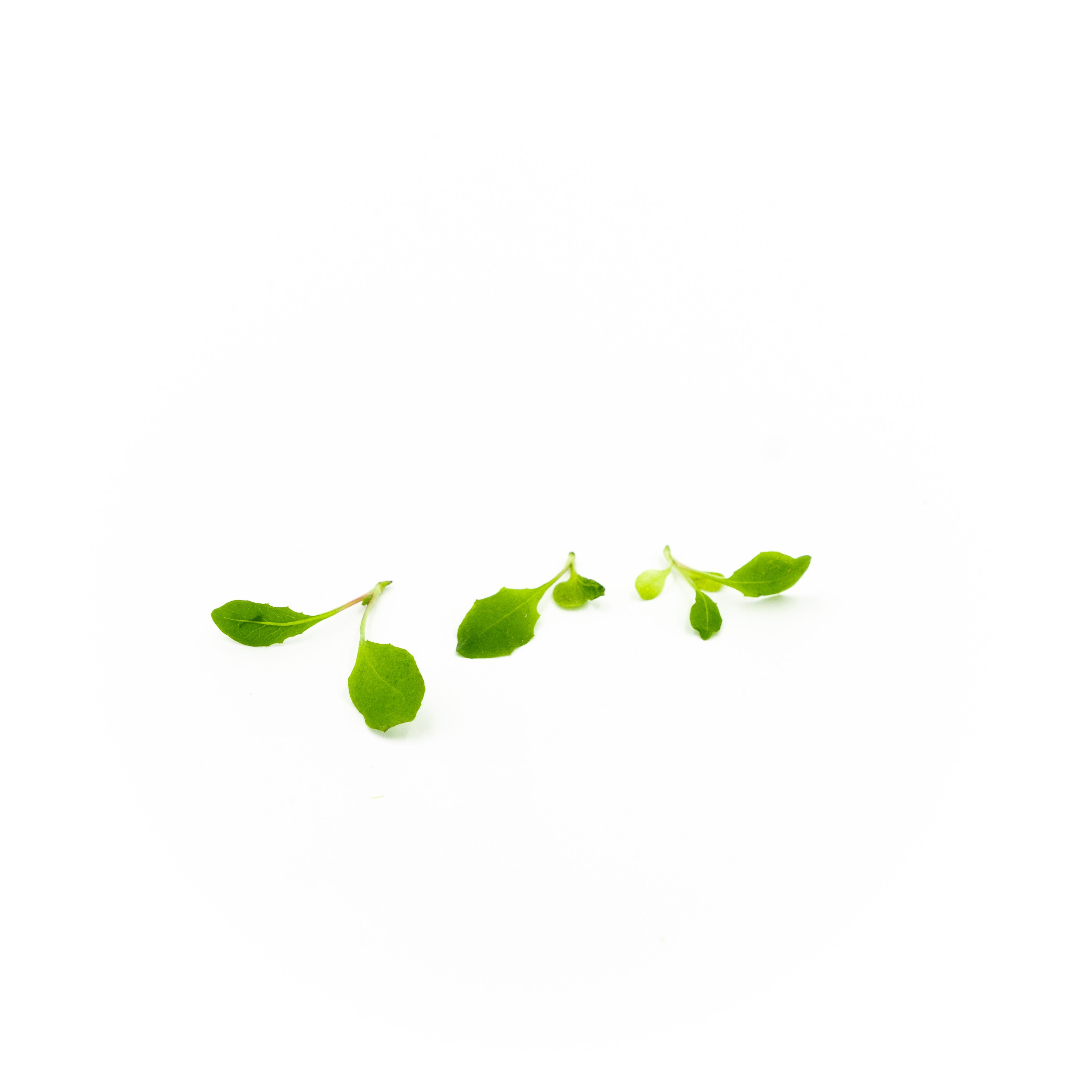Micro Dandelion