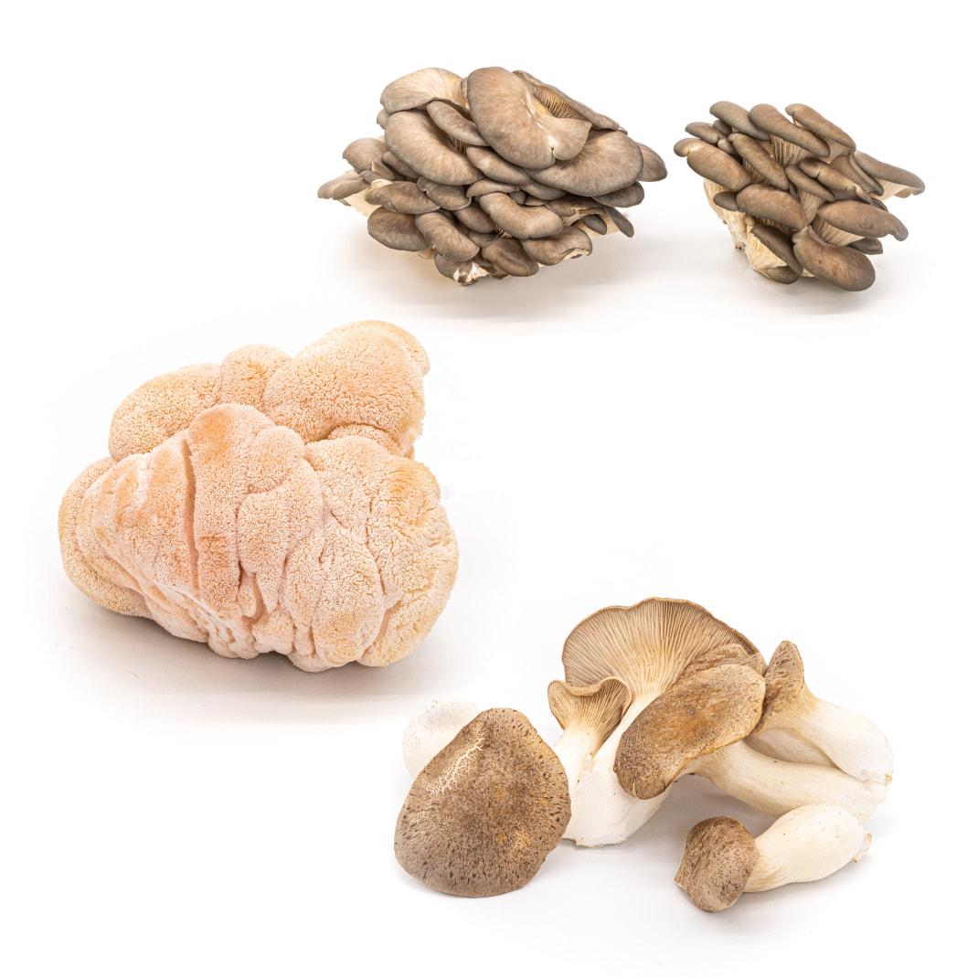 A rotation of just-harvested local luxury mushrooms