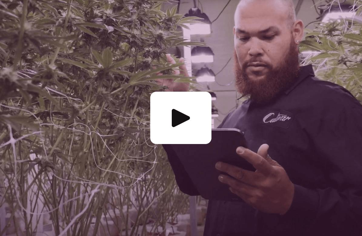 headset-bridge-cannabis-vendor-managed-inventory