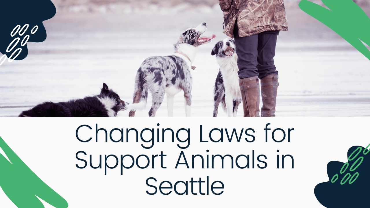 Changing Laws for Support Animals in Seattle