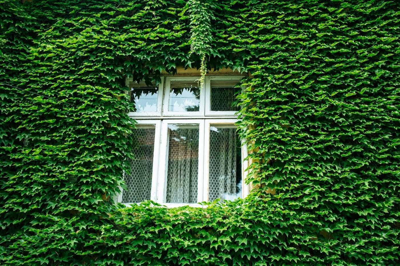 environmentally conscious fixes around your rental home