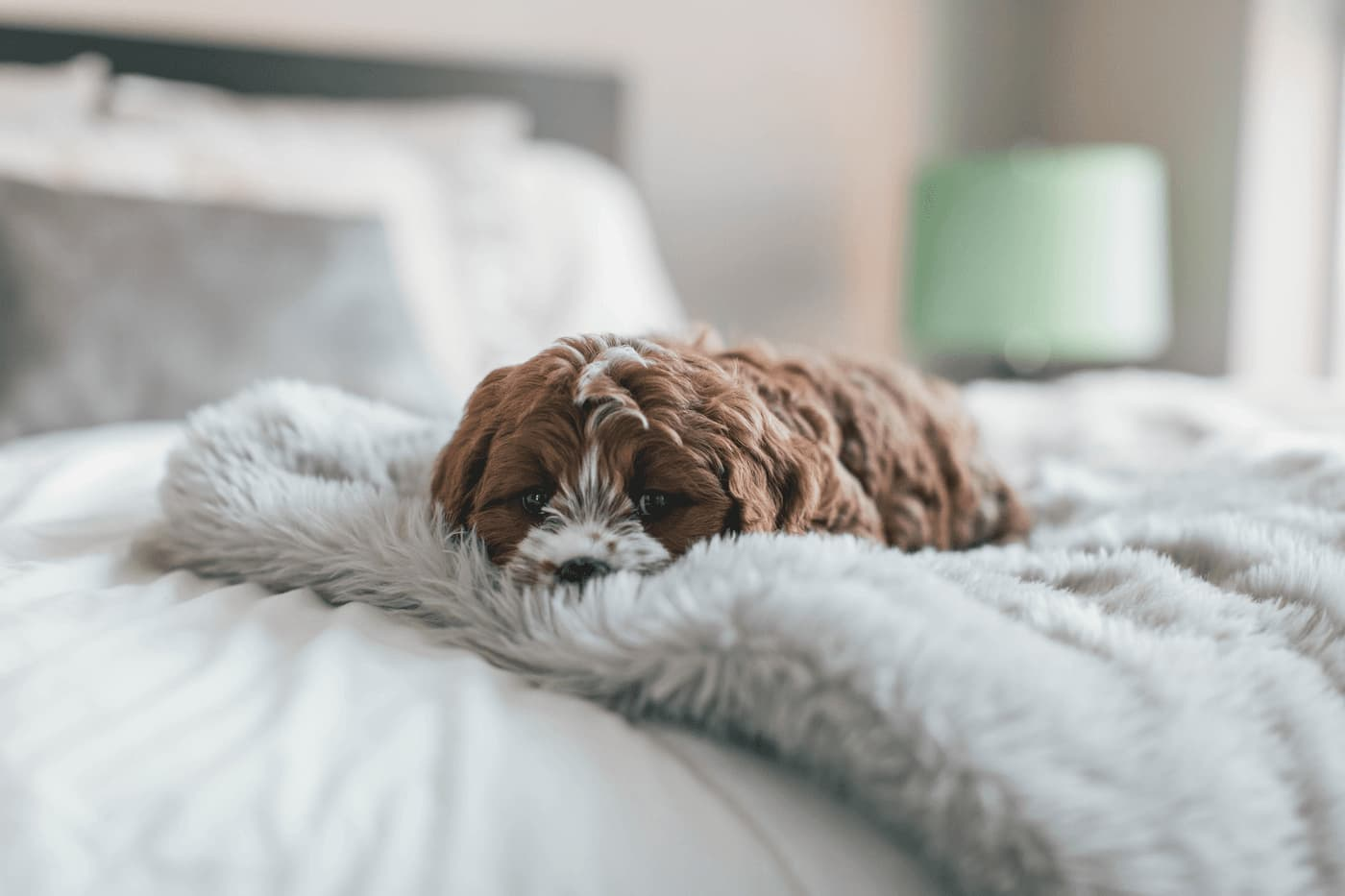 pets in your rental property