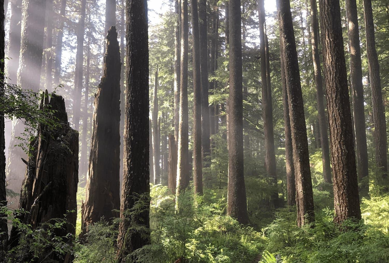 Oregon property management