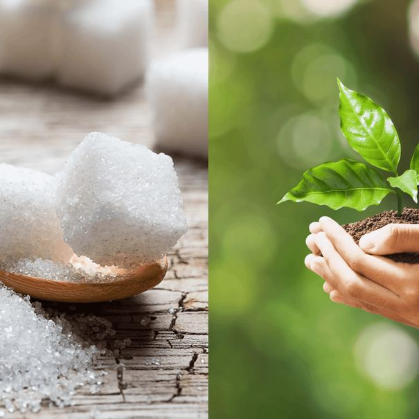 Sugar-Free Sweetening and Climate-Friendly Food: CPG News, Week of Oct 19-23