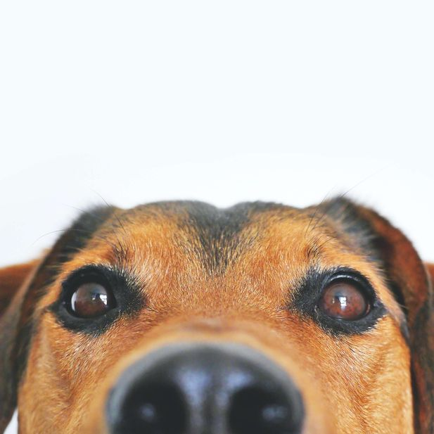 A dog from the nose up against a white background, representing the dog food category for Unioncrate's CPG Year In Review