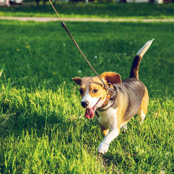 A beagle mix running through a field, representing the collars and leashes category for Unioncrate's CPG Year In Review